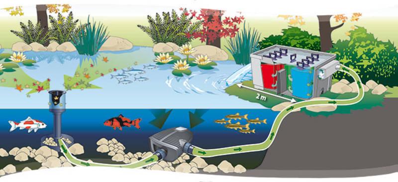 מערכת סינון בבריכה אקולוגית