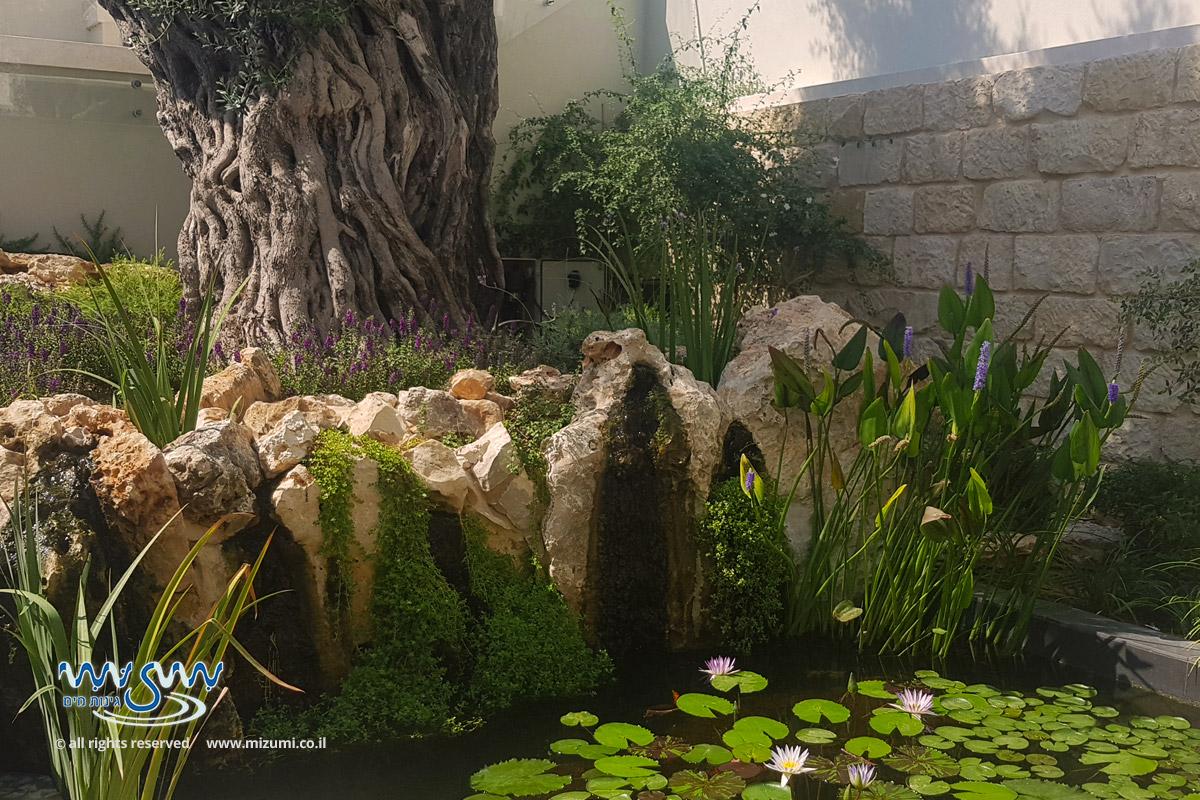בריכת דגים אקולוגית בגינה